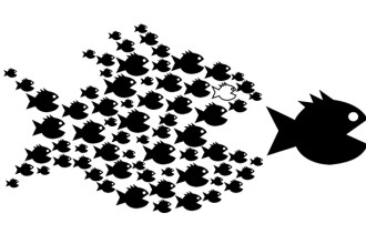fish-organize